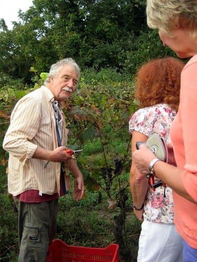 asti-picking-grapes