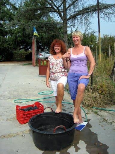 http://pinchandswirl.com/wp-content/uploads/2011/09/barefoot-grape-stomping.jpg