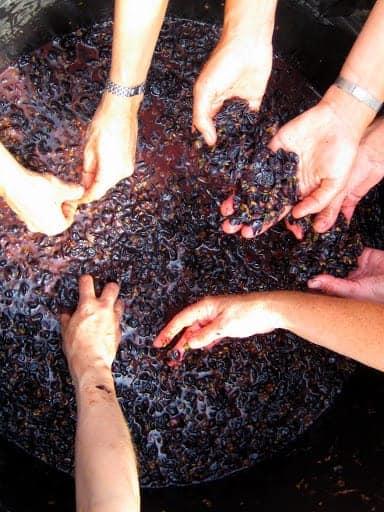 grape-mash
