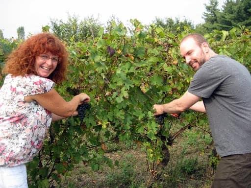 keith-picking-grapes