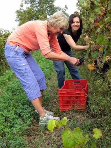 marissa-picking-grapes