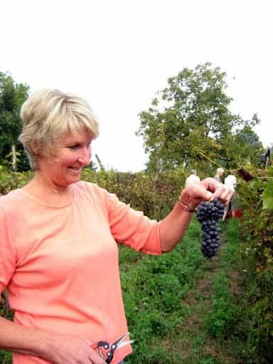 piedmont-grape-picking