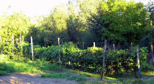 villa-sampaguita-vinyard