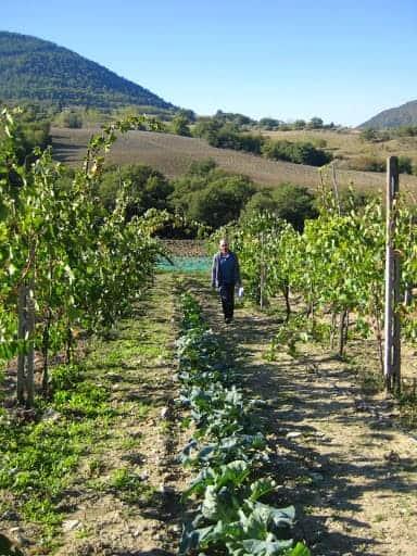 brigolante-vineyard