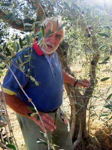carlo-explaining-olives-at-podere-vignali
