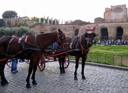 rome-colosseum-7