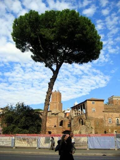 rome-tree