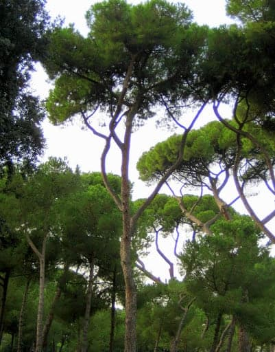 villa-borghese-gardens-4
