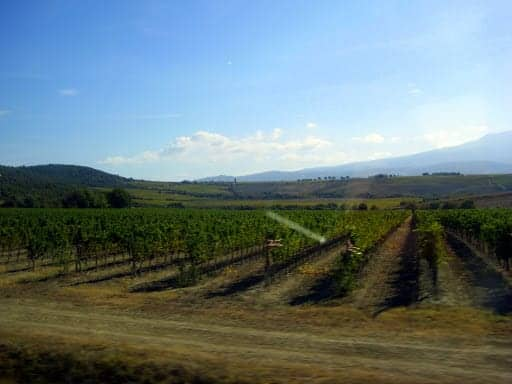 vineyard-from-the-road