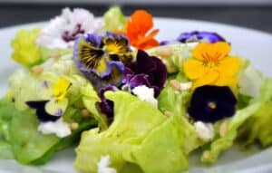 Spring Bouquet Salad with Basil Chive Vinaigrette, Chevre, and Pine Nuts