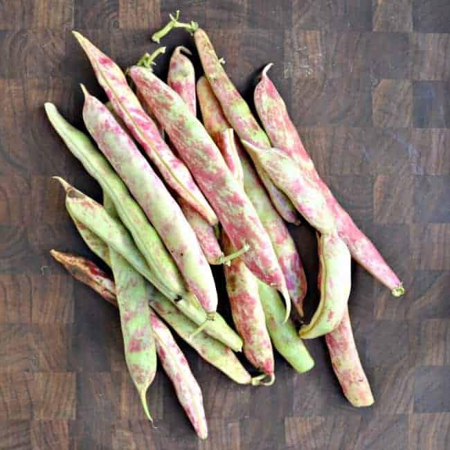 Tongue-of-Fire-Fresh-Shell-Beans