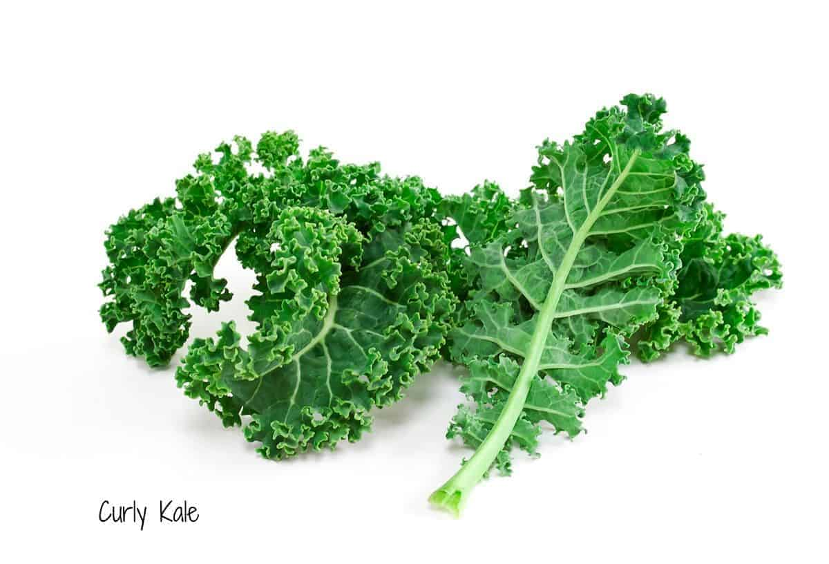 leaves of curly kale
